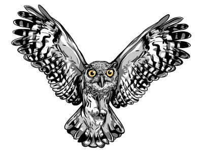 Flying Owl vector feathers owl eyes beak flying owl band gray black white ochre hunt illustration drawing motion prey