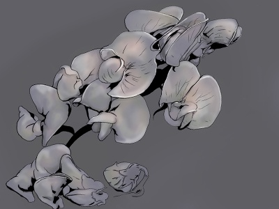 Orchids photoshop drawing painting digital orchid orchids flowers dull gray outlines illustration dark