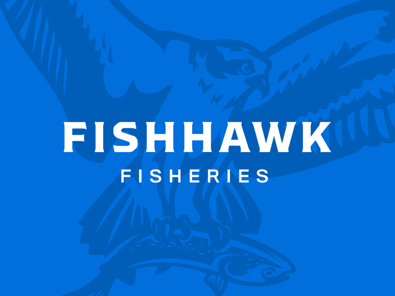 Fishhawk Fisheries branding brand salmon fishery fishing fish osprey hawk illustration logo