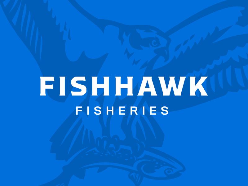 Fishhawk Fisheries branding brand salmon fishery fishing fish osprey hawk illustration logo