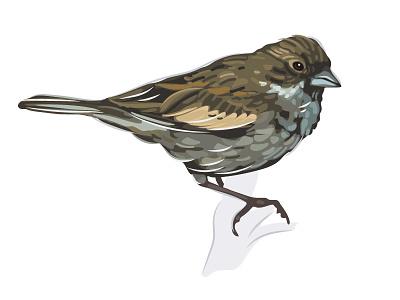 Lyons World Wildlife Fund Lark Bunting animals birds wildlife illustration