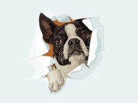 Lyons Dribbble Boston Terrier