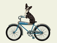 Lyons Dribbble Dog On Bike
