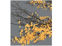 Lyons Fall Colors