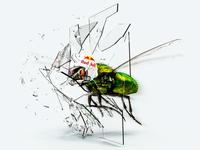 Crazy Fly
