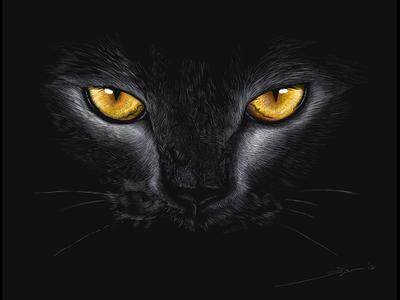 Salem - Digital Pencil Sketch