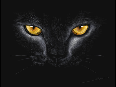 Salem - Digital Pencil Sketch chiaroscuro black eyes animal sketch linea kitty cat