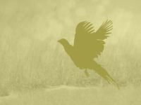 Hunting App Default Images 4/6