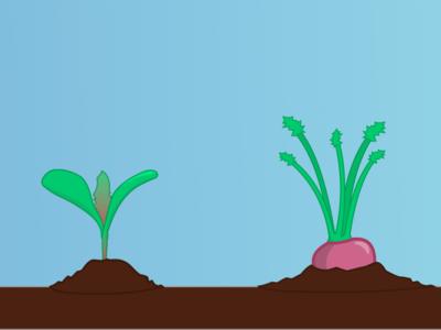 Pocket Farmer - Turnip Lifecycle game app game app vector sketch illustration