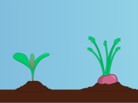 Pocket Farmer - Turnip Lifecycle