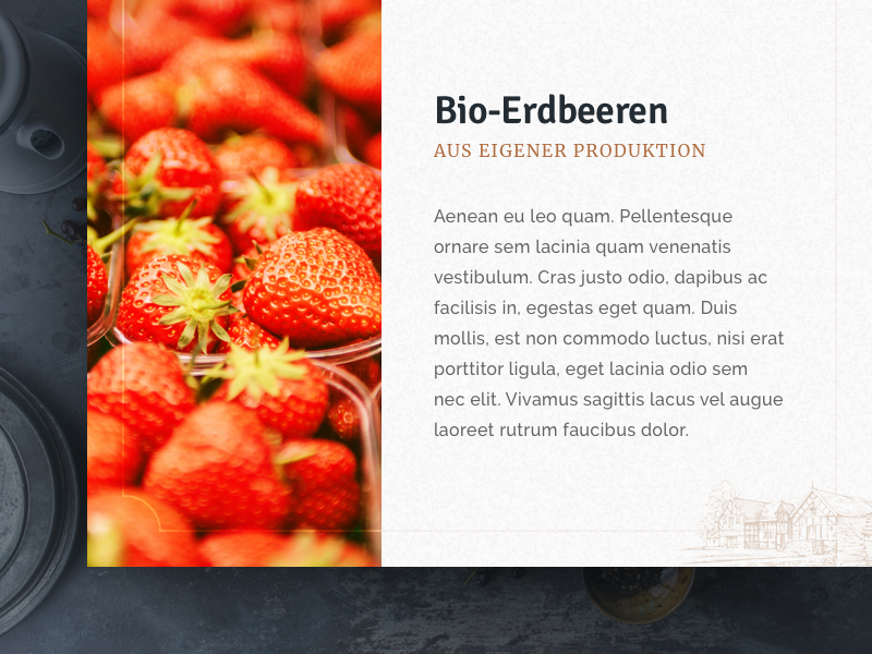 Bio Market lettering visual design website bio market