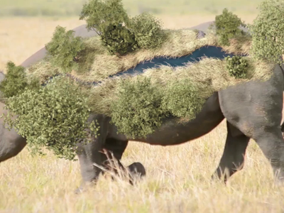 Rhino savannah track cinema4d aftereffects animation tracking simulation 3d artist 3d animation 3d