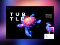 Animal lights: Turtle