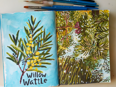 Willow Wattle flower plant nature hand drawn gouache painting art drawing illustration