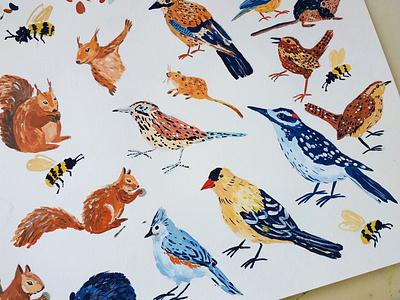 Birds - children book in progress squirrel birds childrens book kids illustration children nature painting art gouache hand drawn drawing illustration