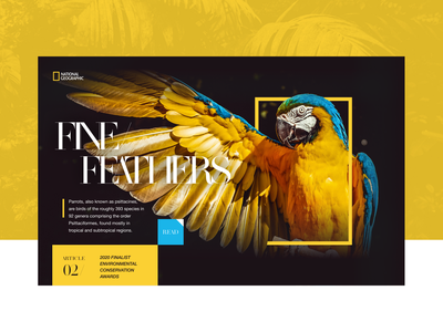 National Geographic Feature Article Concept software company desktop ux ui depth typography animals dark yellow national geographic