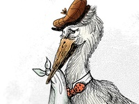 Stork Close-up