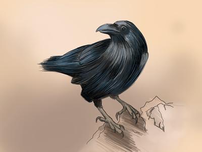 Crow life digital drawing painting different colors crow animalillustration hyperrealism wacom intuos photoshop art illustration digital painting digitalart artwork artist