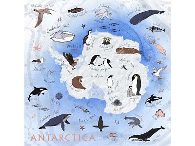The Illustrated Map of Antarctica texture watercolour sea animal fish bird antarctic antarctica continent ink hand drawn animals element illustrated map map