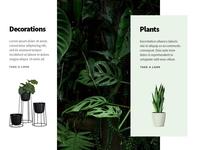 Plants & Interior