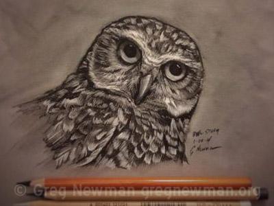 Pastel owl study
