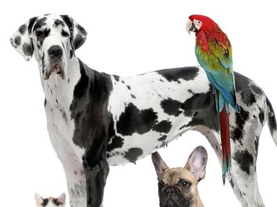 Pet sitters marketplace dog pet sitters sitter pet dubai