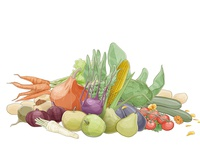 Organic Produce Illustration