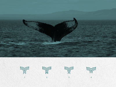 whale line art design vector illustration typography icon flat logo design graphic design branding ui