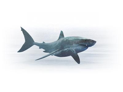 Shark Manipulation