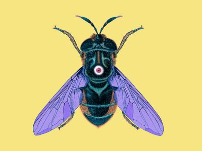 Bugged Eye Fly