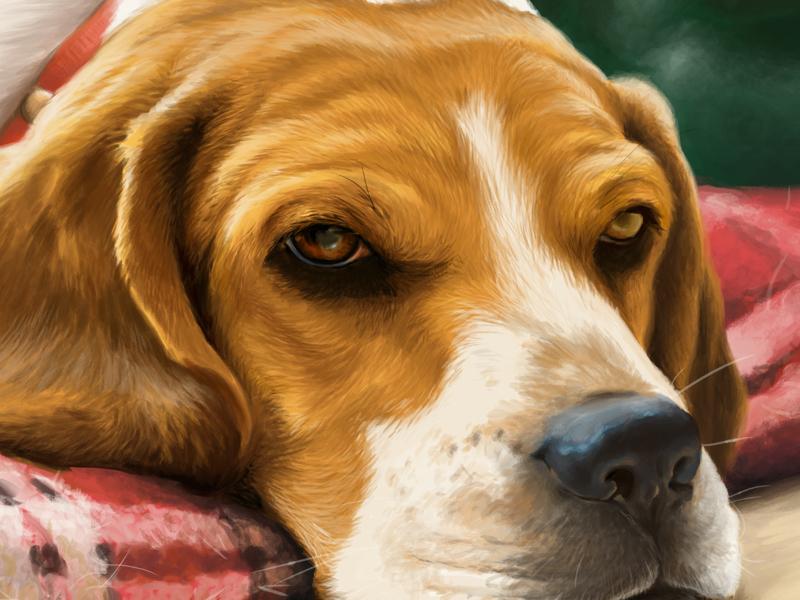 Molly beagle pet dog animal portriat painting digital-paint illustration