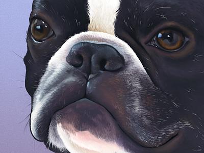 James Saleem bulldog french bulldog boston terrier dog illustration photoshop wacom digitalpainting