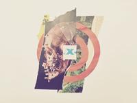 Collage Eleven