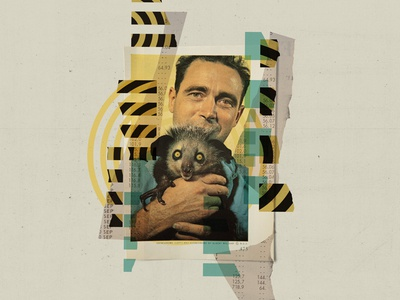 Collage 41