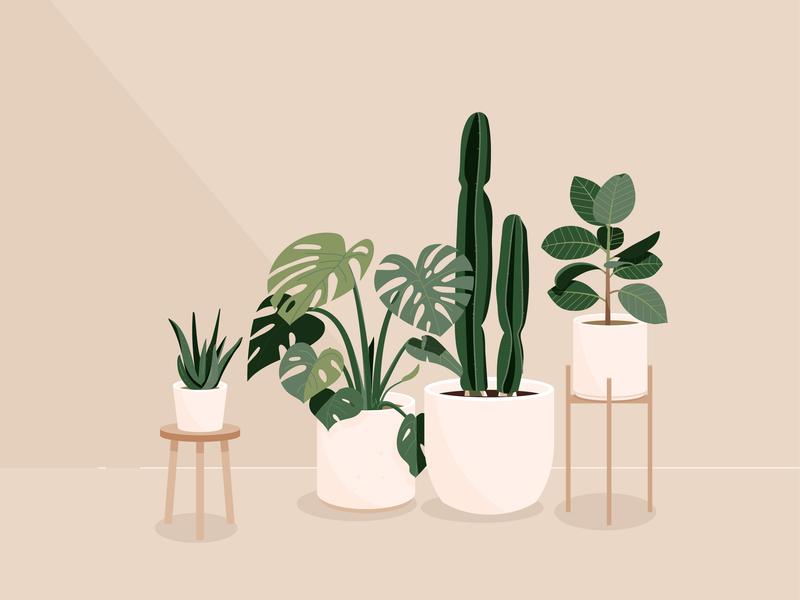 Plants vector illustration aloe cactus monstera plants plant