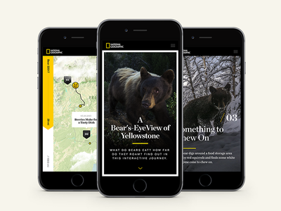 National Geographic - A Bear's-Eye View of Yellowstone hello monday 3d map simple bears mobile national geographic nat geo