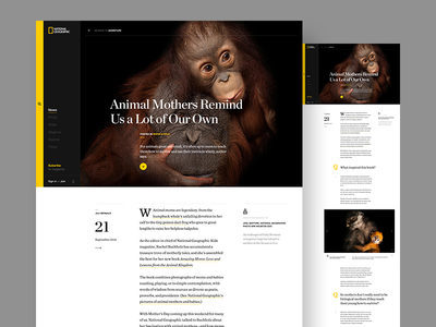 Nat Geo - Article editorial ux ui yellow article page simple nat geo national geographic
