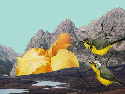 Bird Collage mixed media colour art collage