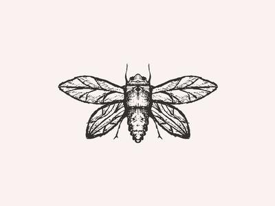 Inktober 02 moth illustration sketch inktober