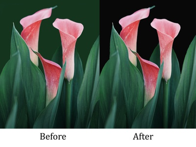 flower before after before and after before after photoshop background remove background design design poster illustration graphicsdesign illustrator