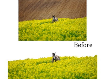 Background remove before after photoshop background remove background design design graphicsdesign illustrator