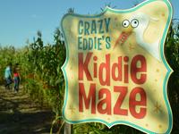 El Paso's Corn Maze