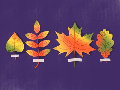 HERBARIUM minimalist advertising texture herbariom fall autumn leaves ui logo illustration graphic design flat design children character business branding