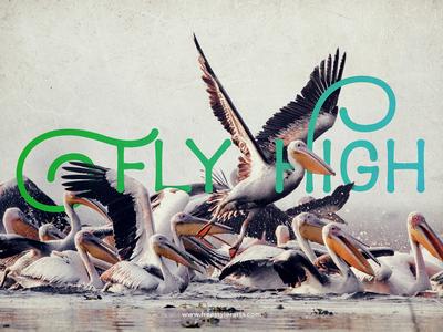 #14 Fly High