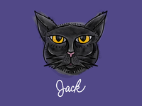 Jack the Black Cat