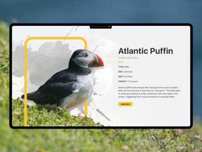 Atlantic Puffin Info UI Design