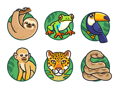 Rainforest animals wildlife rainforest jungle red eyed tree frog leopard python boa constrictor jaguar spider monkey sloth tree frog toco toucan animal illustration cute cartoon vector