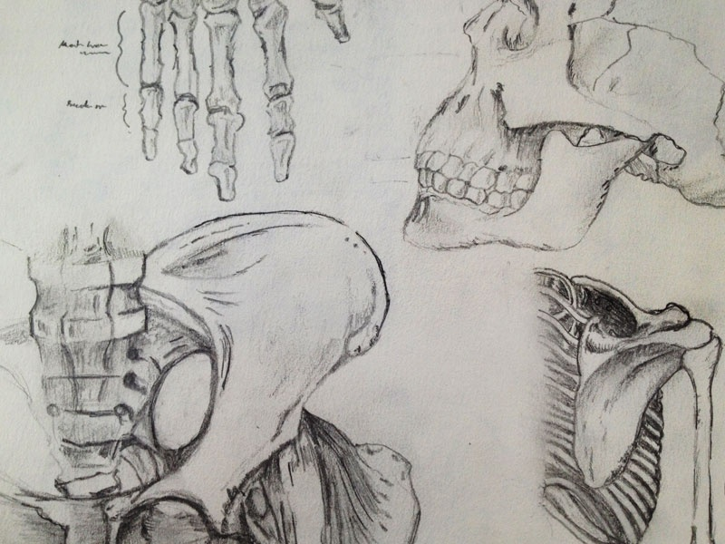 Backbone2 sketches