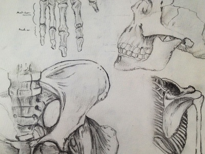 Sketch | Bones sketch paper pencil code school