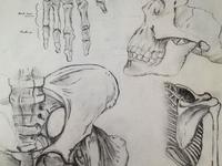 Sketch | Bones